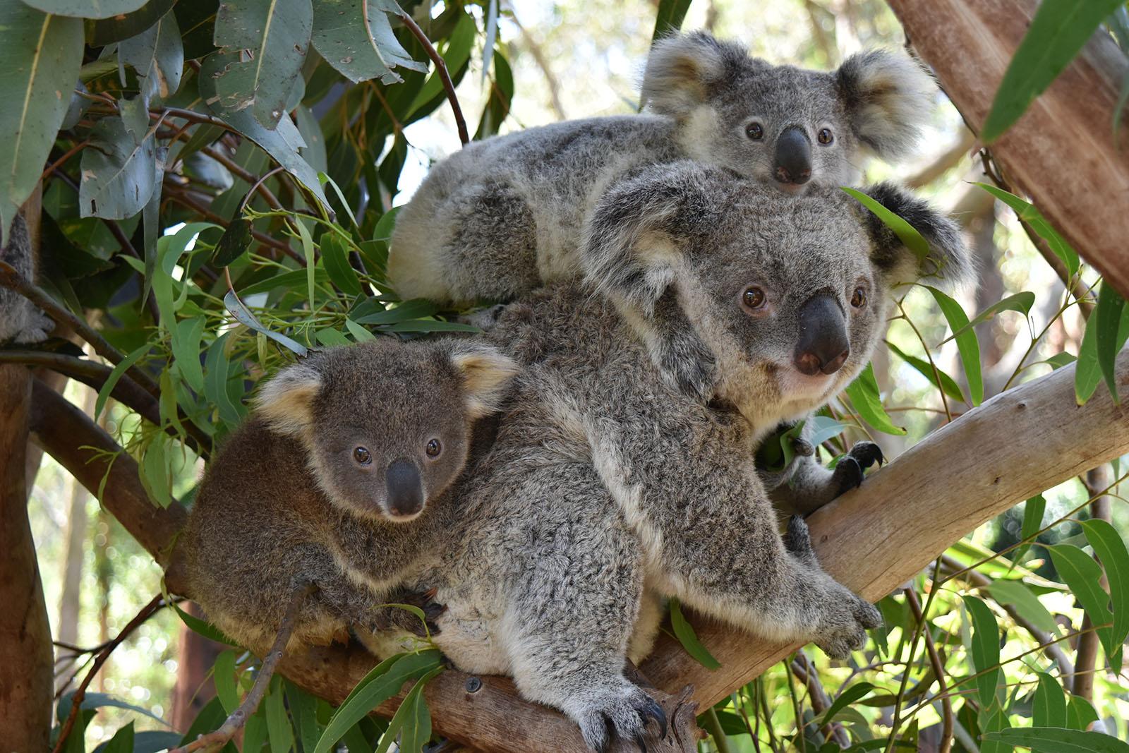 마루 동물원 (입장료 옵션)
